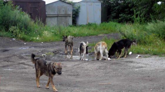 Morcellement La Valette : des chiens errants sèment la terreur