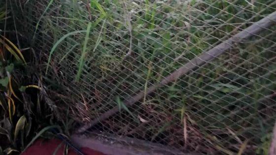 Insalubrité : un terrain de la WMA gêne une habitante de Bambous