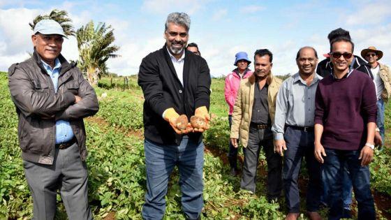 Recherches à Maurice : des pommes de terre clonées bientôt en production