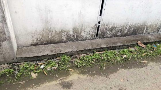 Flacq : des habitants d'Argy réclament le prolongement d'un drain