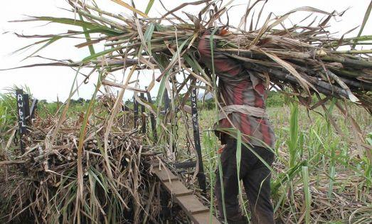 Prix garanti de Rs 25 000 la tonne de sucre pour les 60 premières tonnes : Kreepalloo Sunghoon pour une révision