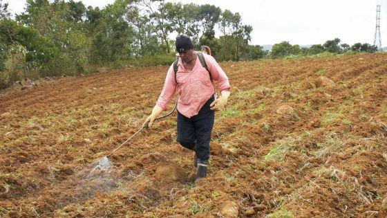 Laboureur, planteur et commerçant: ANAND L'INFATIGABLE