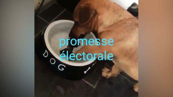 Promesses électorales à gogo : une vidéo fait le buzz