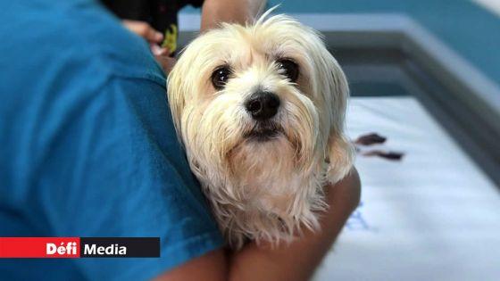 MSAW : La clinique vétérinaire de Rose-Hill opérationnelle à partir de ce mercredi