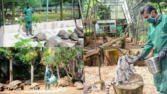 Loisirs : La Vanille Nature Park rouvre ses portes le mercredi 17 juin
