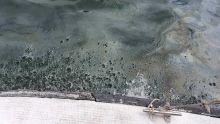 Pollution des lagons de l'Est et du Sud-est: la marée noire prend le large